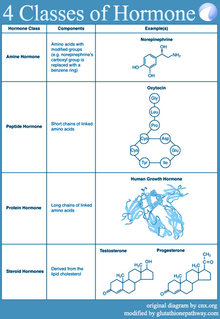 Four major hormone catagories. Amine, peptide, protein, and steroid.