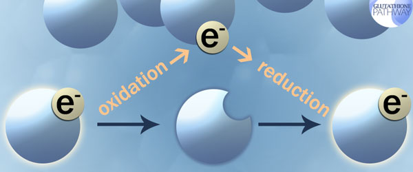 Oxidation and Reduction. The chemical reaction that can create a chain reaction until an antioxidant steps in.